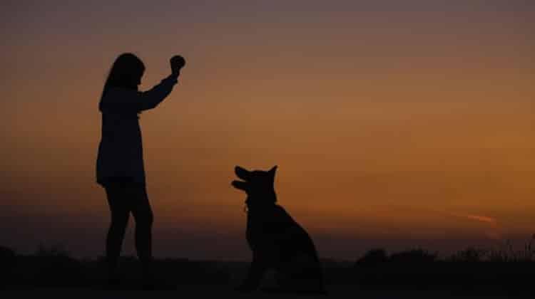 Regole per vivere con un cane nella coppia