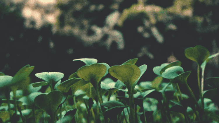 coltivare l'orto come metafora di coltivare una relazione