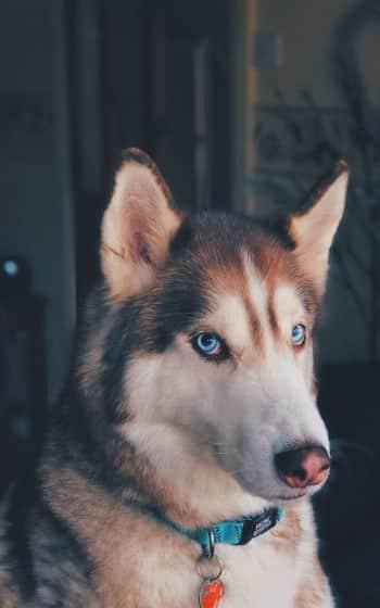 prendere un cane in convivenza
