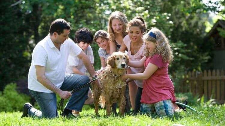Prendere un cane in convivenza: il migliore amico della coppia • un cane in convivenza